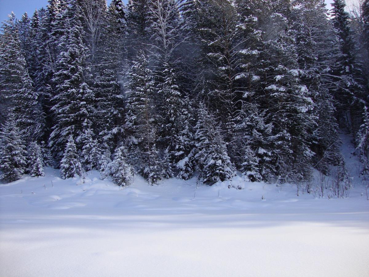 Снежная тайга