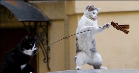 Коты против издевательского использования символов дыма и пламени. Фото: rutopist.livejournal.com